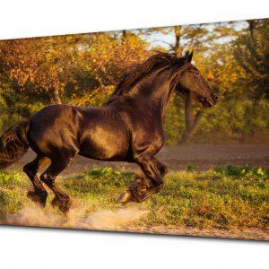 Fotoobraz z koniem, fotoobraz konie
