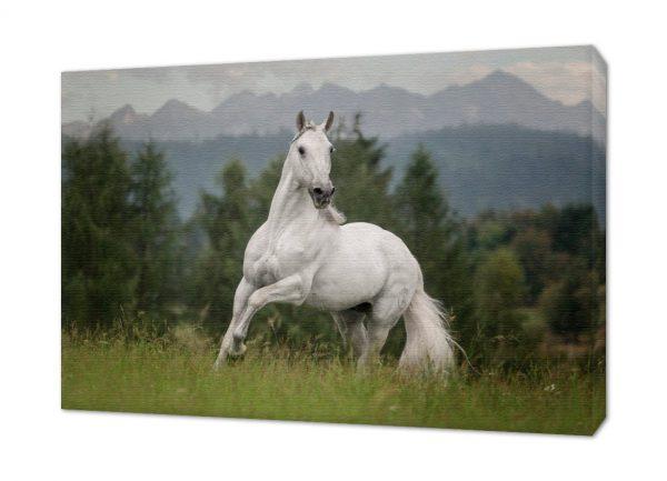 Fotoobraz konie