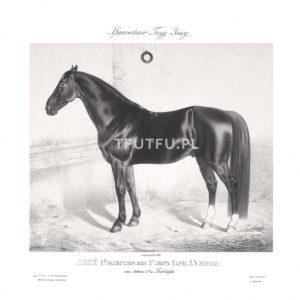 Plakat koń Vintage
