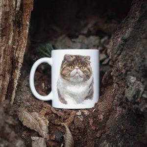 Kot Egzotyczny Krótkowłosy